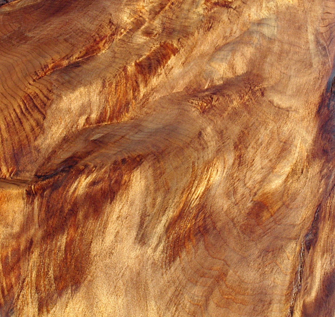 What is Ancient Kauri wood? | Ancientwood, Ltd